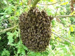 apiculteur brignoles le val