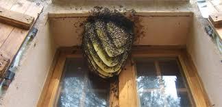 apiculteur essaim abeilles brignoles vins