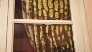 apiculteur essaim abeilles brignoles