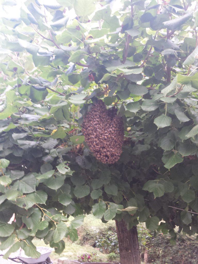 apiculteur var paca brignoles