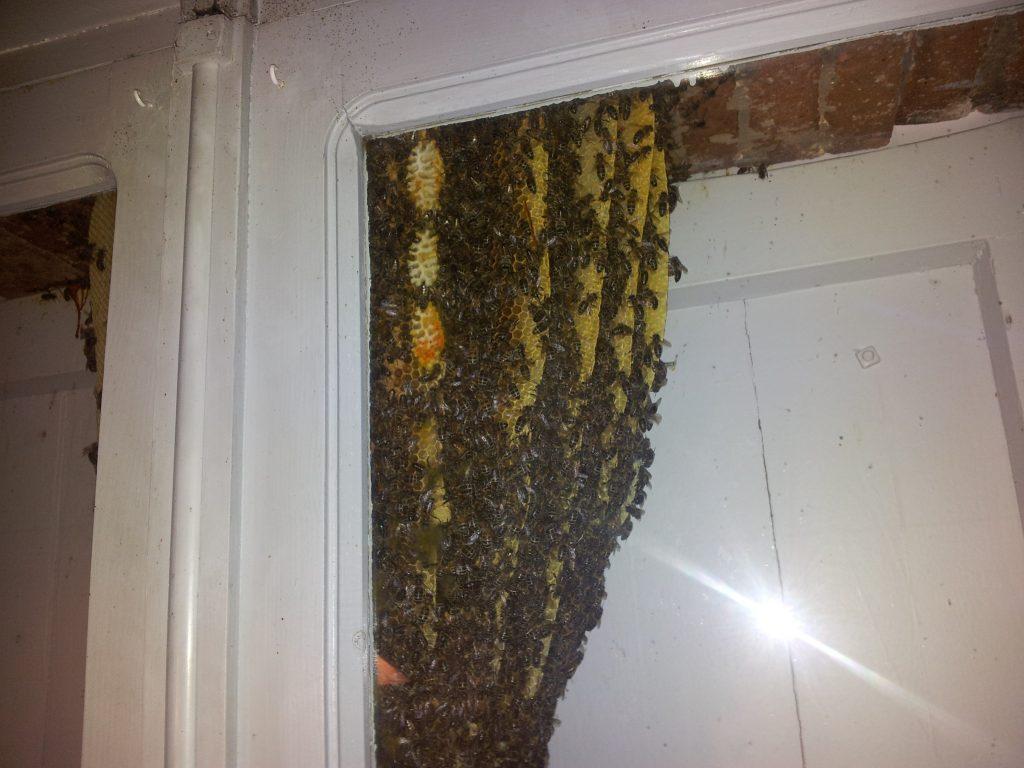 essaim abeilles apiculteur var