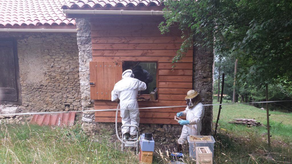 essaim abeilles apiculteur vins