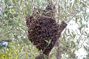 essaim d'abeilles le val