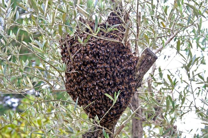 essaim abeilles le val
